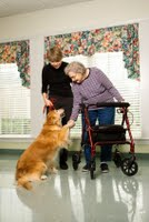 Therapy dog greeting the elderly