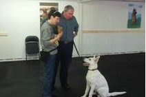 Dog Obedience Class in Nanuet NY